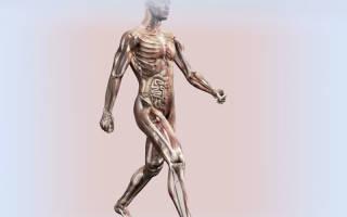 Какой вид спорта признан самым полезным, чем полезна ходьба для здоровья