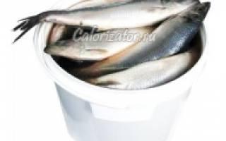 Калорийность сельди – сколько калорий в селедке