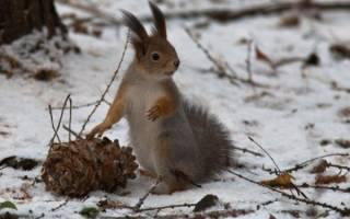 Кедровые орехи – польза и вред для организма взрослых и детей
