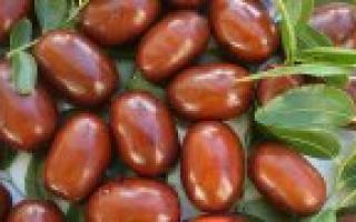 Калорийность свежих фиников на 100 грамм