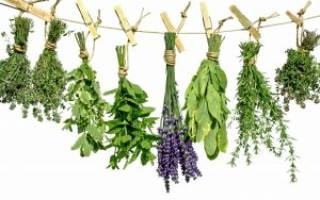 Травы, разжижающие кровь, лекарственные растения для разжижения крови