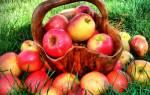 как почистить организм яблоками