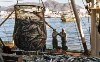 Карп отварной, свежий, жареный: калорийность, химический состав, пищевая ценность рыбы