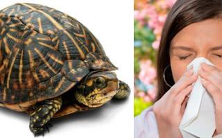 Может ли вызвать аллергию красноухая черепаха