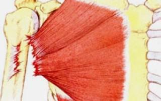 Полный и частичный разрыв большой грудной мышцы, симптомы и лечение разрыва грудной мышцы