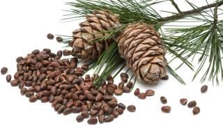 Вред и польза скорлупы кедровых орехов, рецепты отваров и настоек на скорлупе кедровых орехов