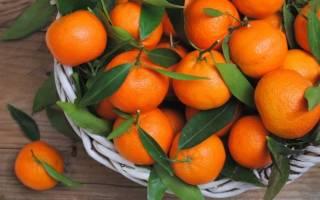 Мандарины для похудения – рацион питания