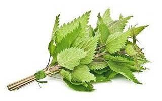 Листья крапивы для роста волос: рецепты отваров и настоек, применение