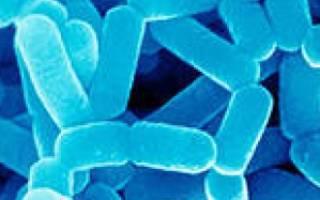 Полезные свойства лактобактерий, зачем в организме нужны лактобактерии