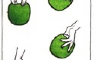 Как правильно держать ракетку в настольном теннисе, освойте правильный хват