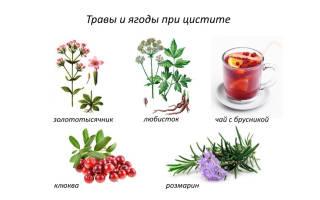 Травы при цистите – сборы и отдельные растения