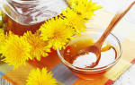 Чем полезен мед из одуванчиков, как приготовить мед из одуванчиков