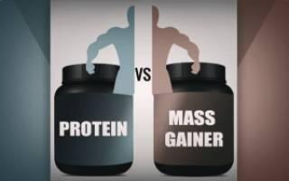 Протеин или гейнер: что лучше для набора массы Сравнение протеина и гейнера