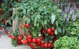 Томаты черри – калорийность, состав, польза и вред