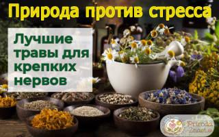 Что пить при стрессе, какие травы помогают снять стресс, успокаивающие травы при стрессе, натуральные успокоительные