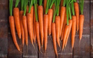 Морковь (сырая, отварная) – калорийность, полезные свойства и вред, как правильно употреблять морковь