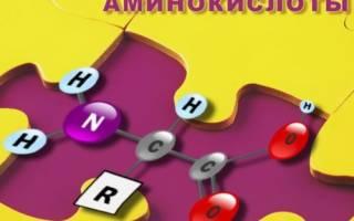 Польза от аминокислот, заменимые и незаменимые аминокислоты