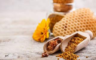 Как принимать пчелиную пергу, лечебные свойства перги, от чего помогает лечебная перга