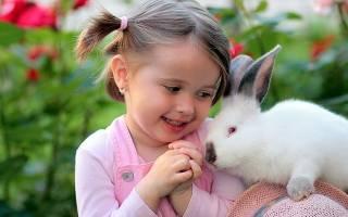 Может ли быть аллергия на декоративного кролика и как ее лечить