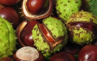 Каштаны: пищевая ценность, состав, БЖУ