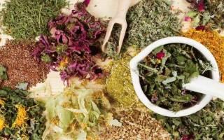 Чем полезны травяные компрессы, как делать компресы из трав в домашних условиях