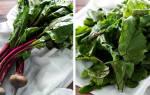 Полезные свойства свекольной ботвы, листья свеклы – польза и противопоказания