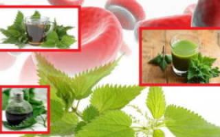 Крапива в гинекологии – применение, противопоказания