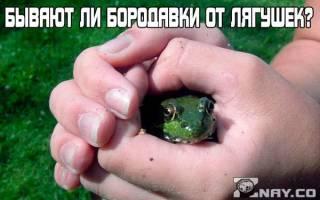 Бородавки от лягушек миф или реальность