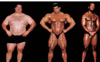 Тренировки для мезоморфов для набора массы, на сушку и для похудения