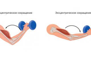 Что такое эксцентрический тренинг в чем преимущества эксцентрического тренинга как нарастить мышцы с помощью эксцентрических упражнений