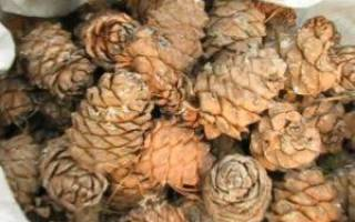 Как правильно очистить кедровые орехи в домашних условиях, способы очистки кедровых орехов от скорлупы