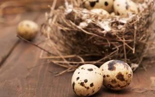 Лечебные и полезные свойства скорлупы перепелиных яиц