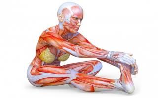 Комплексная растяжка мышц, фото техники выполнения упражнения