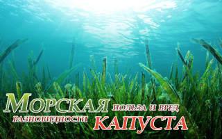 Чем полезна морская капуста что лечит морская капуста, полезные свойства морской капусты и рецепты салатов сморской капустой