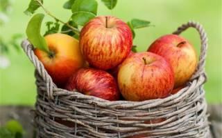Полезные свойства и калорийность яблока