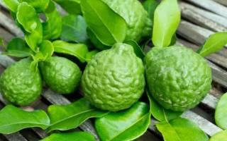 Польза и вред бергамота, чем полезен чай с бергамотом, как применять масло бергамота, свойства бергамота