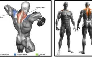 Что дает тяга гантели к груди, как выполнять тягу гантелей к груди